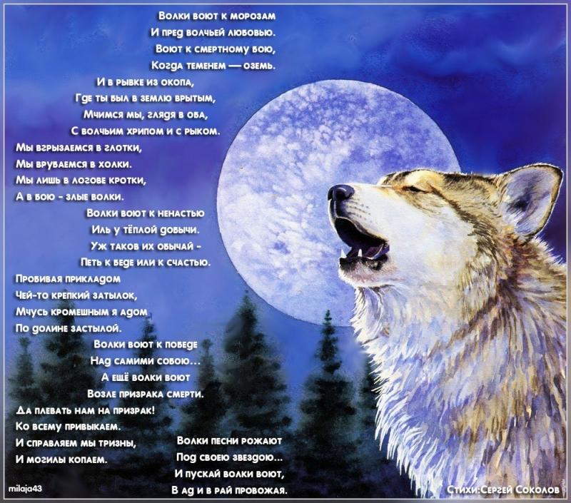 Стих душа волка текст